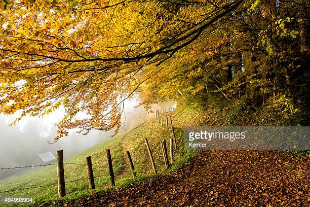 Chemin avec barrière à l'orée de la forêt