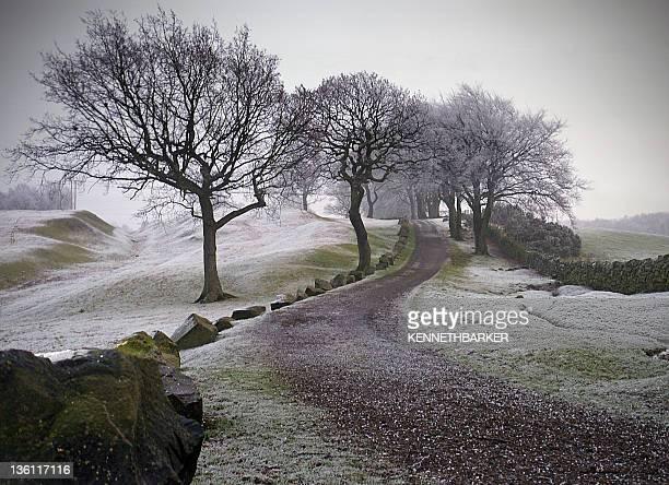 Path with trees, stones, Scotland