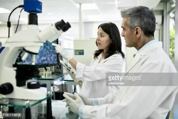 patólogos que estudian la exploración médica en la pantalla de la computadora - laboratorio clinico fotografías e imágenes de stock