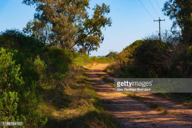 paths land bush dirt road amidst
