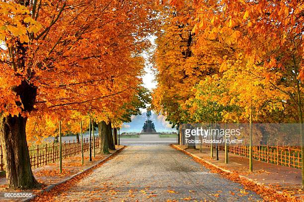 Pathway Along Autumnal Trees
