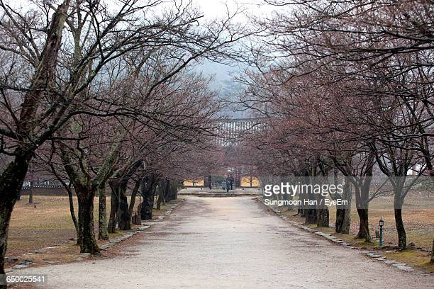 pathway amidst bare trees during winter - jeonju stock pictures, royalty-free photos & images