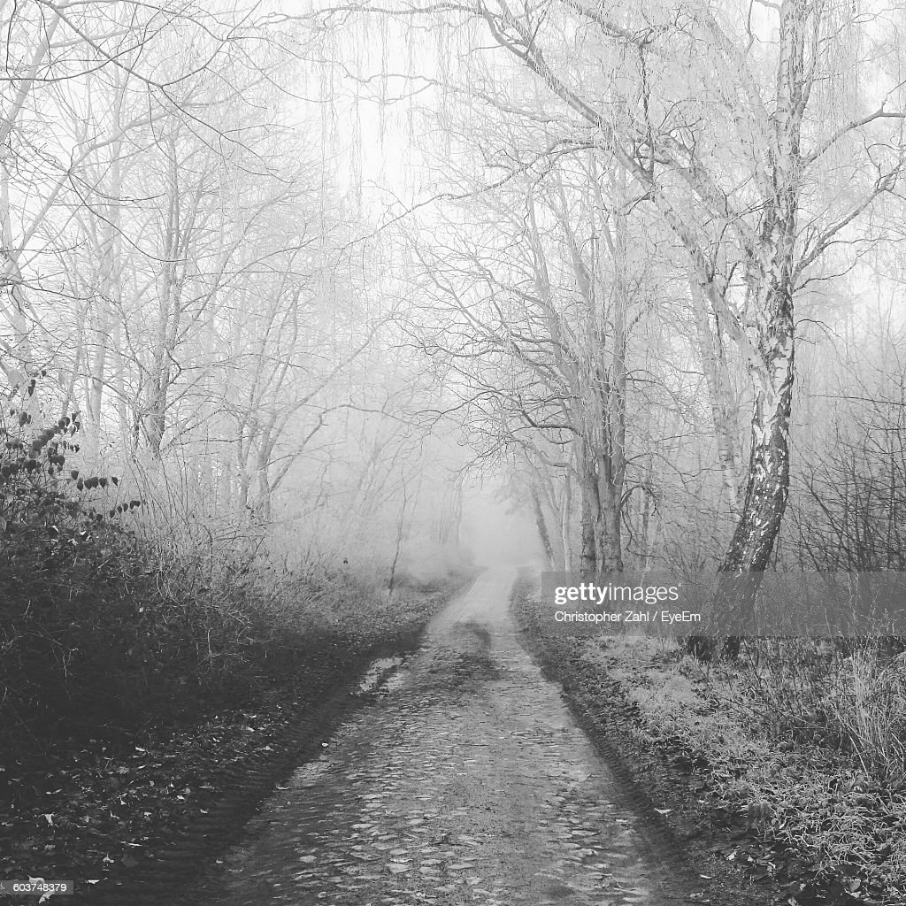 Pathway Amidst Snow Covered Trees During Foggy Weather : Stock Photo