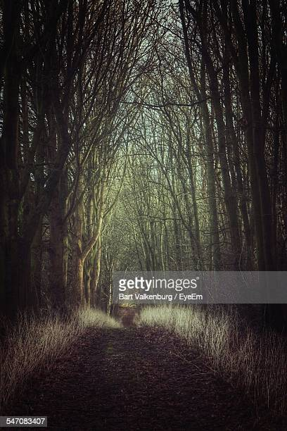 Pathway Amidst Trees At Forest
