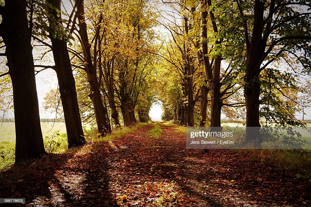 Pathway Amidst Trees At Forest : Stock-Foto