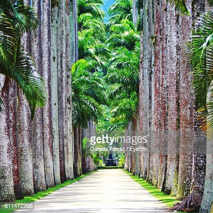 Pathway Amidst Trees At Rio De Janeiro Botanical Garden Stock Photo ...