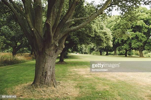 pathway amidst trees on field in park - bortes imagens e fotografias de stock