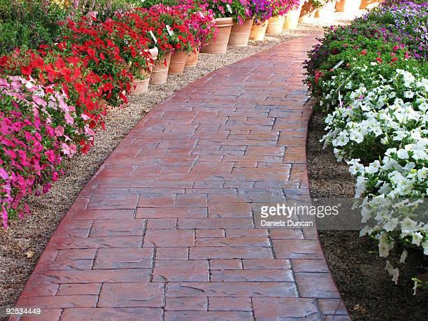 Pathway among flowers