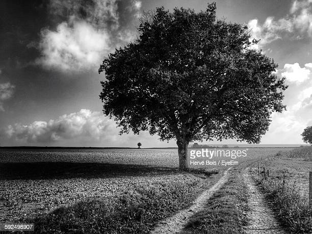 Pathway By Tree On Grassy Field Against Cloudy Sky