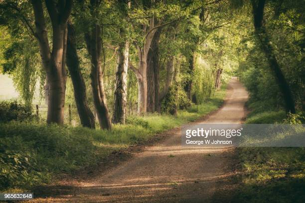 pathway i - hertfordshire stock pictures, royalty-free photos & images