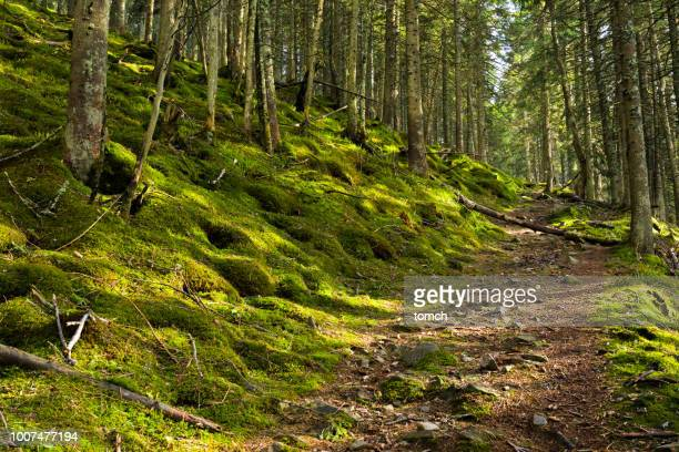 pathway in a green forest - moss stock pictures, royalty-free photos & images