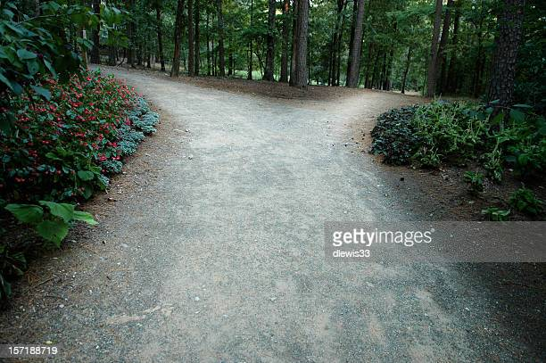 Pathway in the woods that leads to a fork