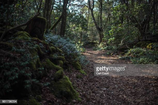 A pathway leads through Aokigahara forest on March 13 2018 in Fujikawaguchiko Japan Aokigahara forest lies on the on the northwestern flank of Mount...