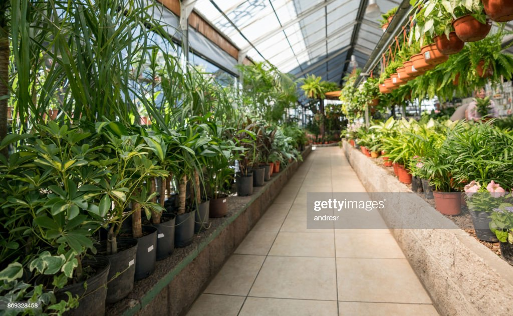 Pathway of a garden center and plants, bushes and flower plants on the sides of the pathway : Stock Photo