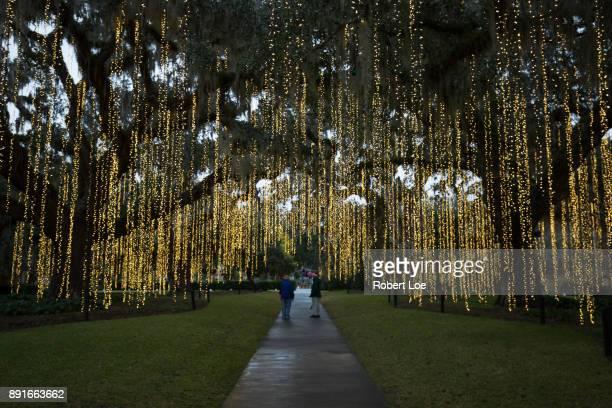Pathway of Lights