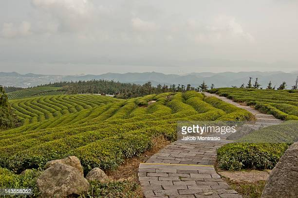 pathway on tea mountain - jakob montrasio stock pictures, royalty-free photos & images