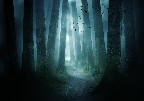 Pathway Through A Dark Forest 1035213106