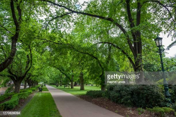 pathway through the lush bendigo botanic gardens - bendigo stock pictures, royalty-free photos & images