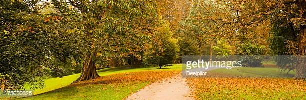 caminho através de árvores em um parque no outono - trilha passagem de pedestres - fotografias e filmes do acervo