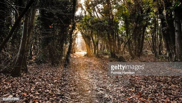 Pathway to a glade in a forest