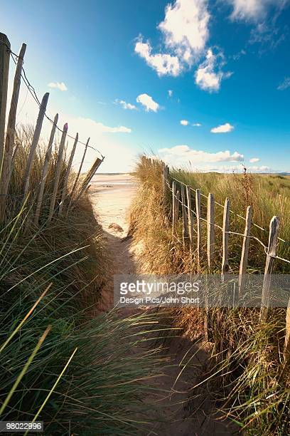 pathway to the beach, beadnell, northumberland, england - northumberland stock pictures, royalty-free photos & images
