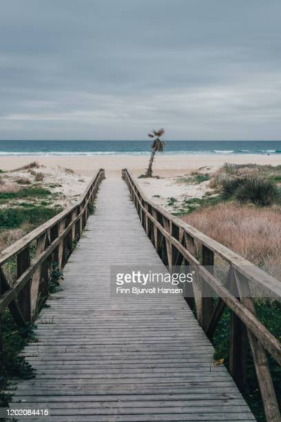 pathway to the beach. palmtree at the end of the pathway - finn bjurvoll stock pictures, royalty-free photos & images