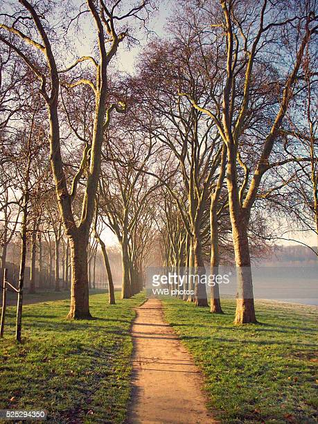 Pathway winding through rows of London Plane Trees, Versailles, Paris