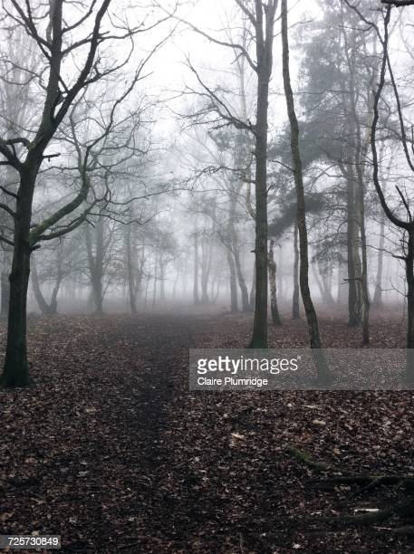 pathways  - claire plumridge stock pictures, royalty-free photos & images