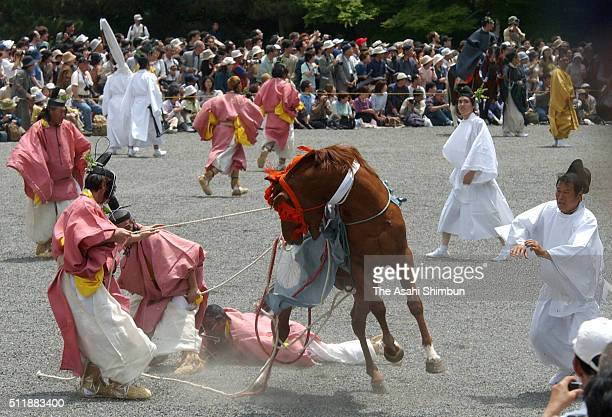 Paticipants wearing ancient costumes struggle to manage a wild horse during the Aoi Festival on May 15 2004 in Kyoto Japan