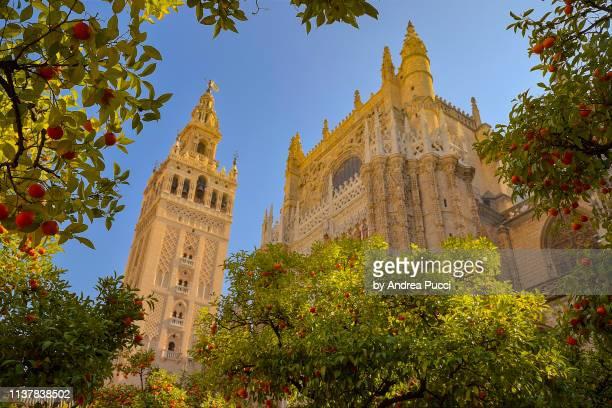 patio de los naranjos, seville cathedral, seville, andalusia, spain - sevilla fotografías e imágenes de stock