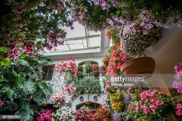 patio decorated with flowers during patios festival, córdoba - スペイン コルドバ市 ストックフォトと画像