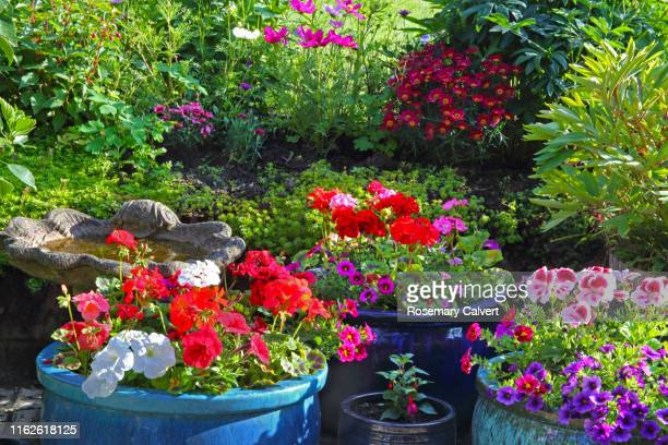patio pots and garden border full of colourful flowers. - blue stock pictures, royalty-free photos & images