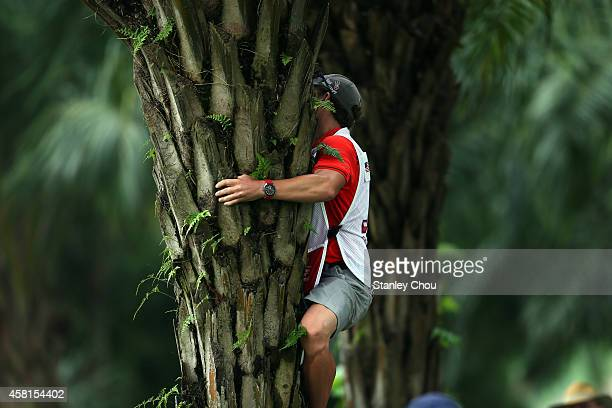 Patrick Reed of United States' caddie climbs over a palm tree to recover the golf ball on the 10th hole during day 2 of the 2014 CIMB Classic at...