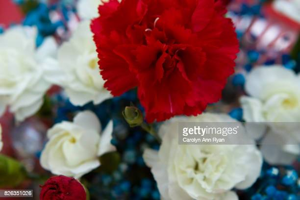patriotic flowers - labor day stock pictures, royalty-free photos & images