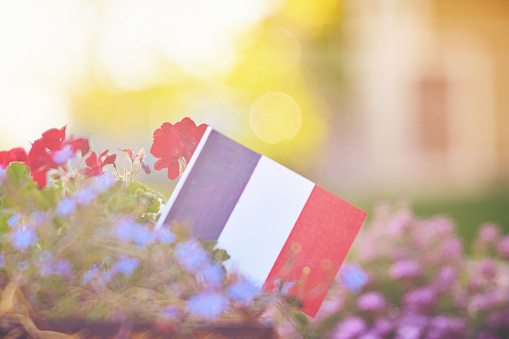 Patriotic French flag background with flowers and sun flare 974535742
