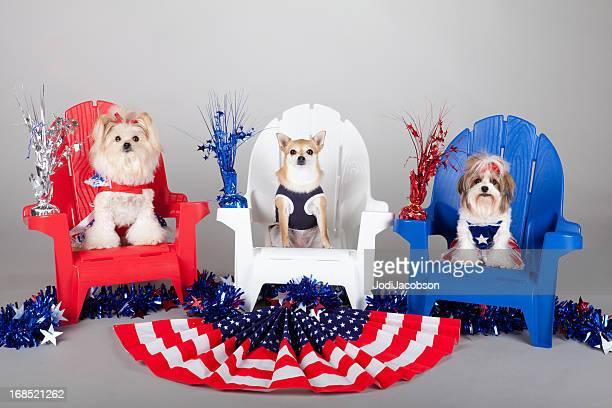 Patriótica estadounidense puppies