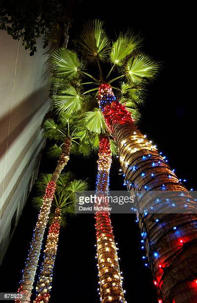 Patriotically colored Christmas lights decorate palm trees on Santa Monica Blvd December 4 2001 in Beverly Hills California
