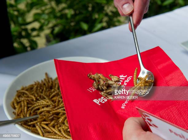 A patron is served roasted crickets and mealworms on June 4 2014 during a global Pestaurant event sponsored by Ehrlich Pest Control held at the...