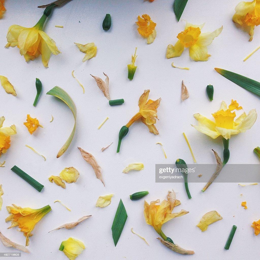 模様の花の部分 : ストックフォト