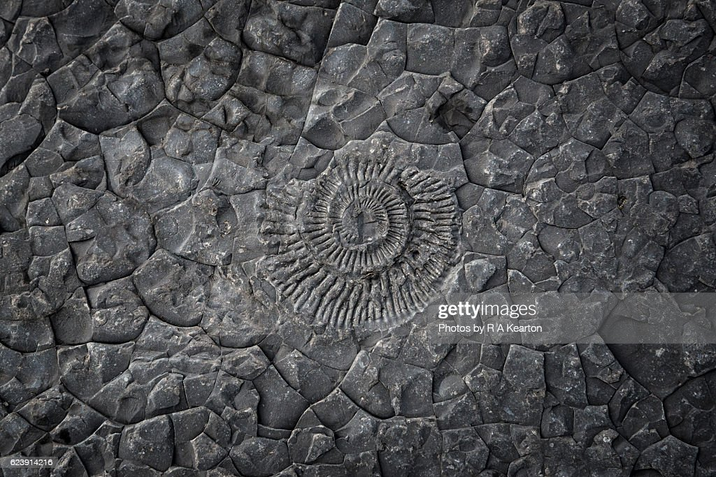 Pattern of an Ammonite fossil embedded in rock : Stock Photo