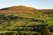 Pattern of old stone walls on Calver hill, Reeth, Swaledale, Yorkshire