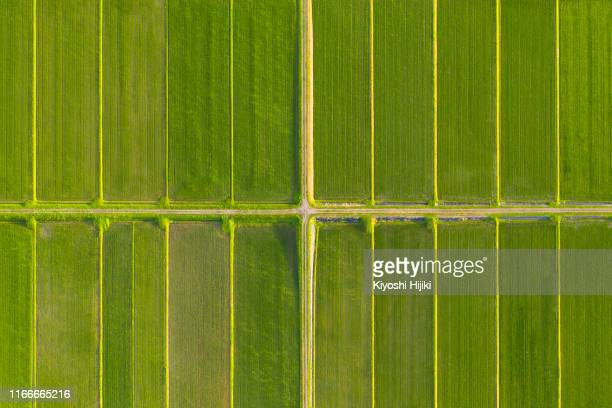 pattern of paddy rice field by drone - 水田 ストックフォトと画像