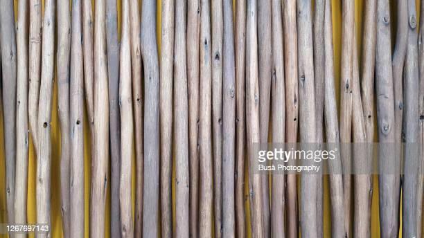 pattern of parallel tree branches (twigs) against yellow background - twijg stockfoto's en -beelden