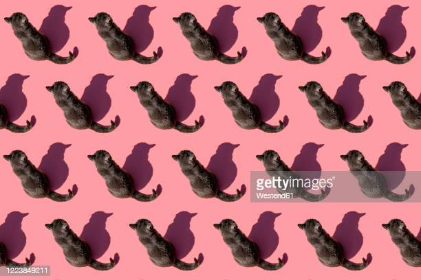 pattern of russian blue cat sitting against pink background - large group of animals stock pictures, royalty-free photos & images