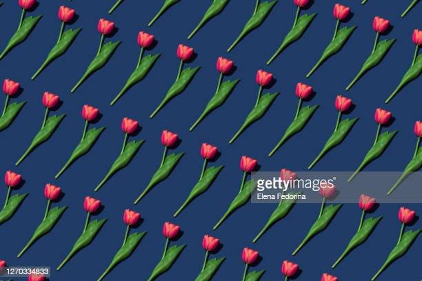 pattern with tulips. - international match stock pictures, royalty-free photos & images