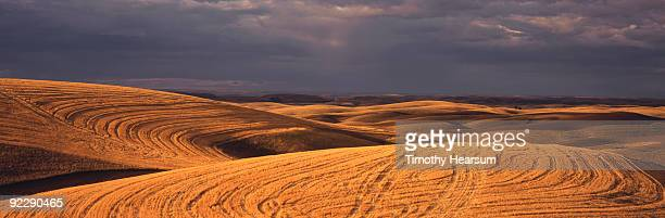 patterns in cut grain field with storm clouds - timothy hearsum stock photos and pictures
