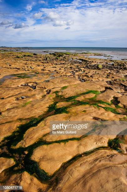 Patterns in the rock along Alnmouth Beach, Northumberland, England