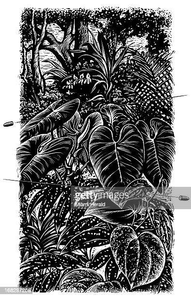 Patterson Clark BW scratchboardstyle illustration of bullets whizzing through highly detailed drawing of Amazon jungle Can be used with stories about...