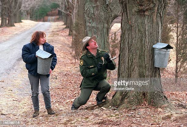 Patti Steinman of the Trailside Museum holds a sap bucket while MDC Parks supervisor Pat Flynn drills a hole into Sugar Maple tree at Brookwood Farm