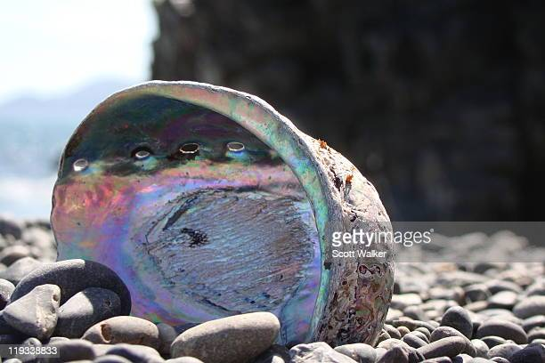 Paua shell on pebbles